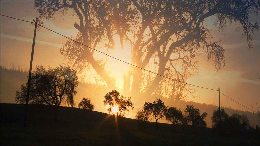 Morgentau in der Knittkuhl